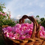 Tour Bulgaria Speciale Valle delle Rose